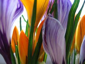 orange-n-purple-flowers.jpg